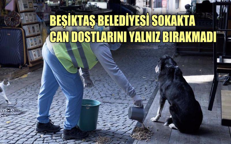 Beşiktaş Belediyesi can dostlarını yalnız bırakmadı