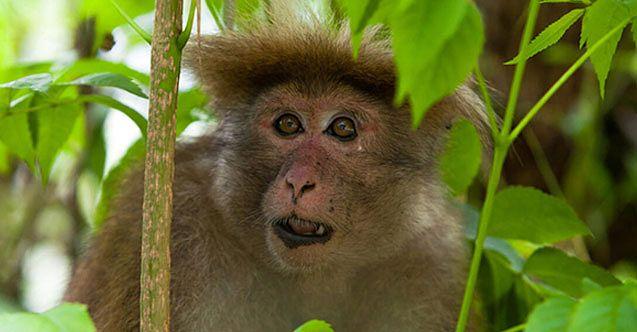 1 kişiyi öldürüp 250 kişiyi yaralayan alkolik maymuna müebbet hapis