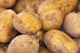10 farklı patates tohumu üretildi