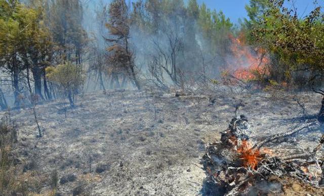 15 dekar makilikle zeytin ve çam ağaçları yandı