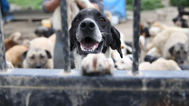 AK Parti'den 'Hayvan Hakları Yasası' açıklaması