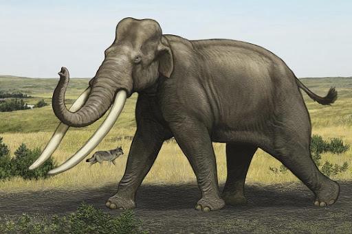 Almanya'da 300 bin yıllık fil iskeleti bulundu