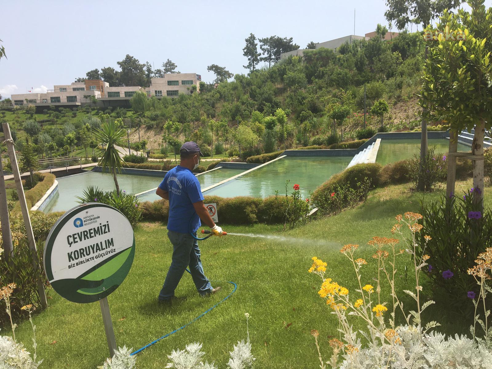 Antalya Büyükşehir yeşil alanlarda ilaçlama yaptı