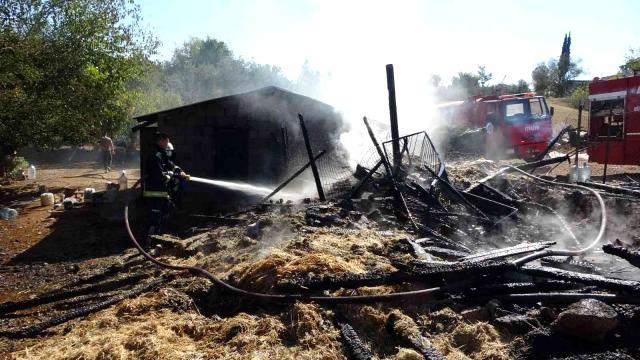 Antalya'da yangında 15 koyun telef oldu
