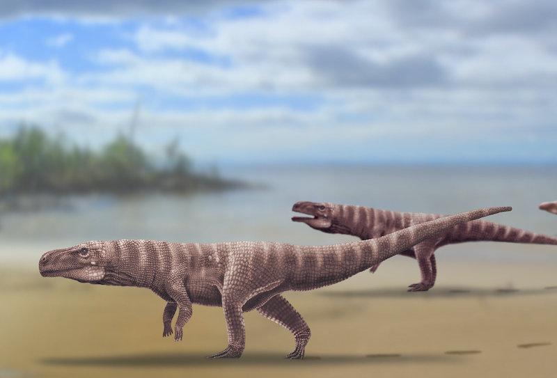 Antik timsahlar da iki ayak üstünde yürüyordu!