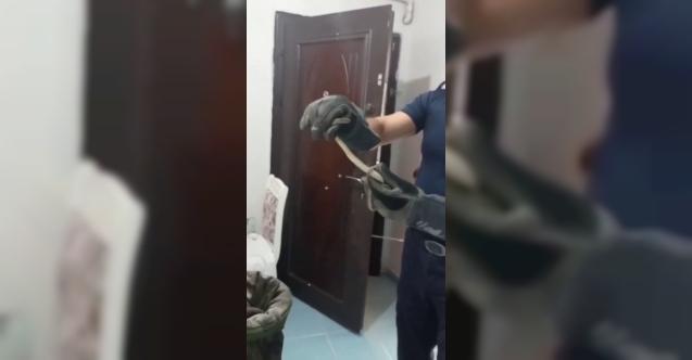 Avcılar'da bir evin elektrik sigortasından yılan çıktı