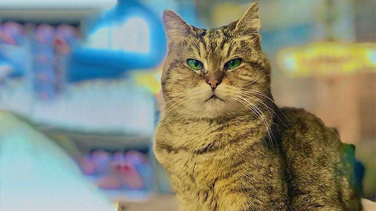 Ayasofya'nın kedisi Gli'nin sağlığı tehlike altında
