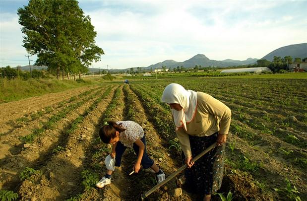 Bakan Dönmez: 17 ildeki çiftçilerin elektrik borcu 23,5 milyon lira