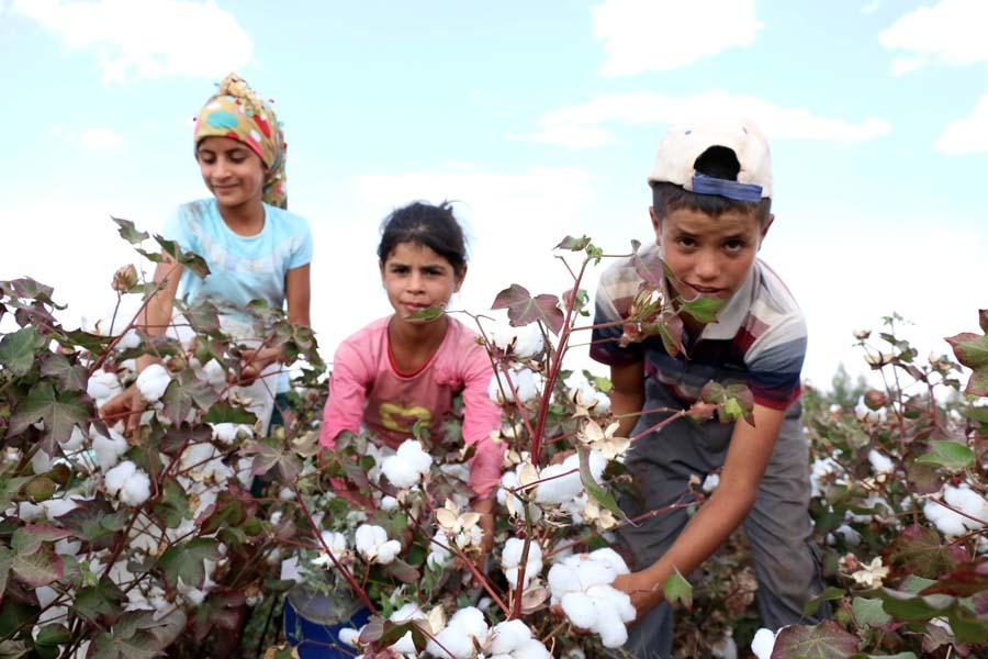 Bakan Selçuk: Türkiye'de 16 bin 193 tarım işçisi öğrenci var