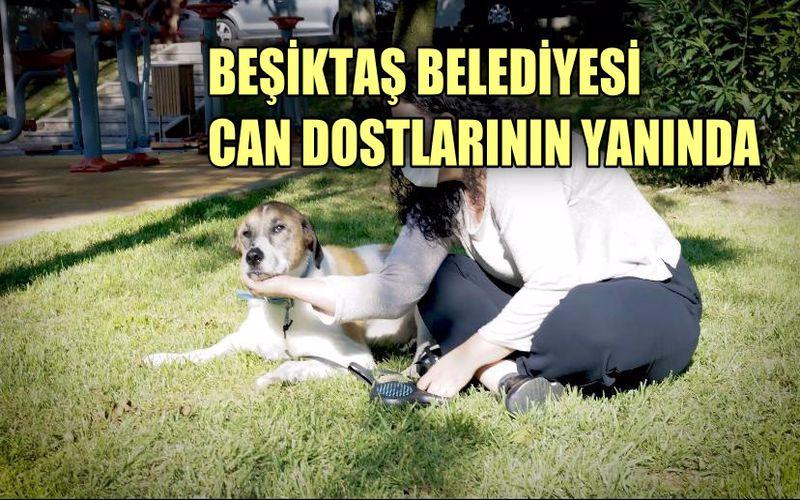 Beşiktaş Belediyesi can dostlarının yanında