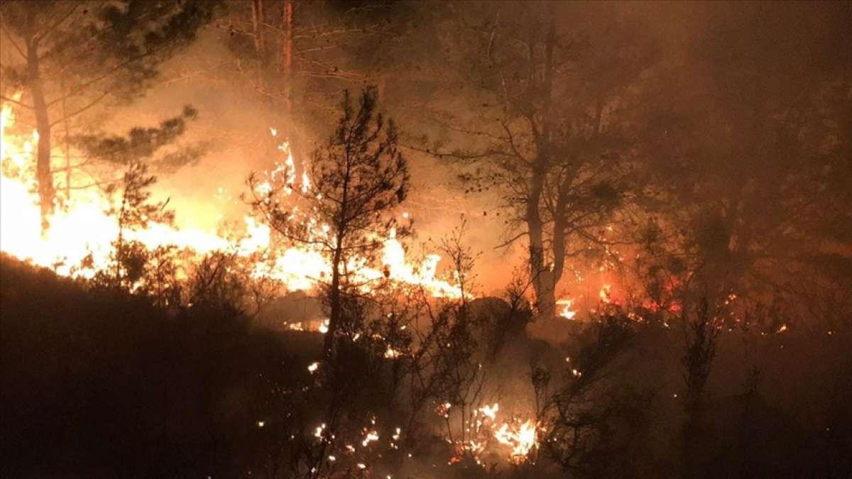 Cezayir'deki orman yangınlarında en az 65 kişi hayatını kaybetti