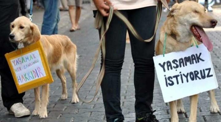 """CHP'li Bakan Hayvan Hakları Yasası'nı hatırlattı: """"Neyi bekliyorsunuz?"""