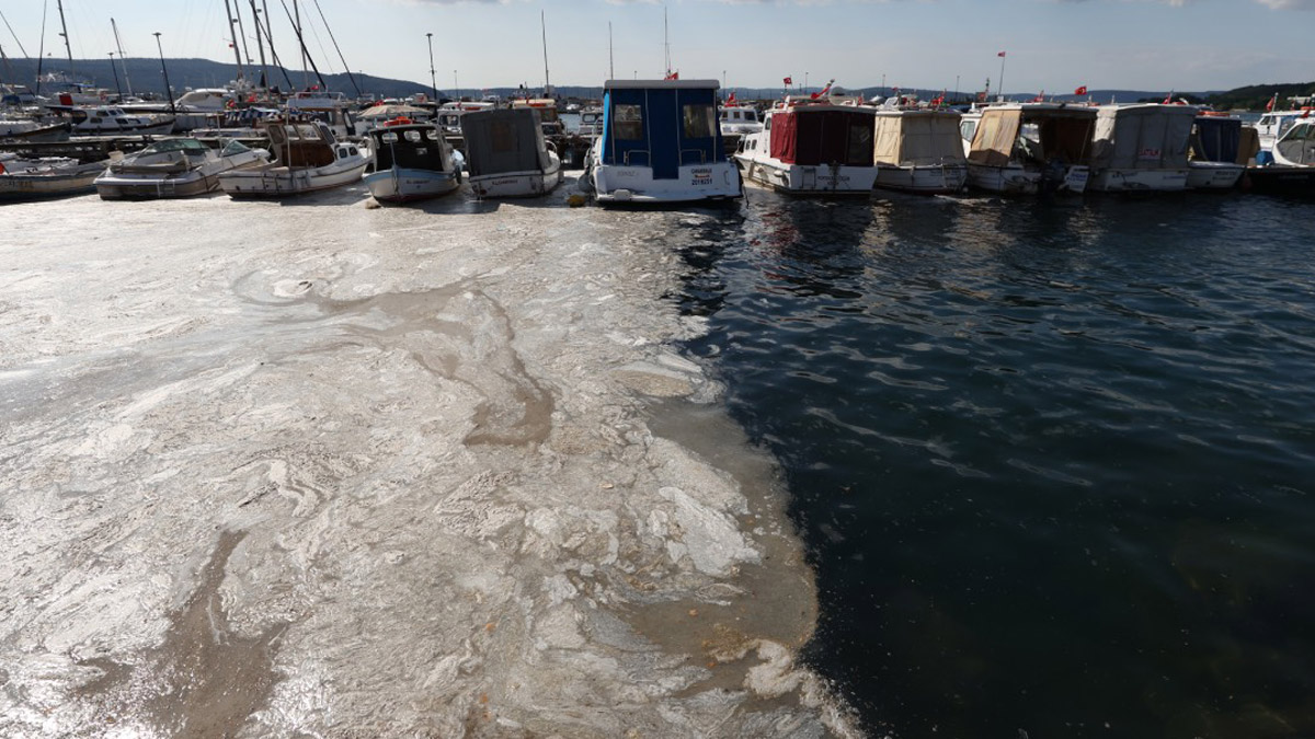 Deniz salyası Ege Denizi'ne akmaya başladı