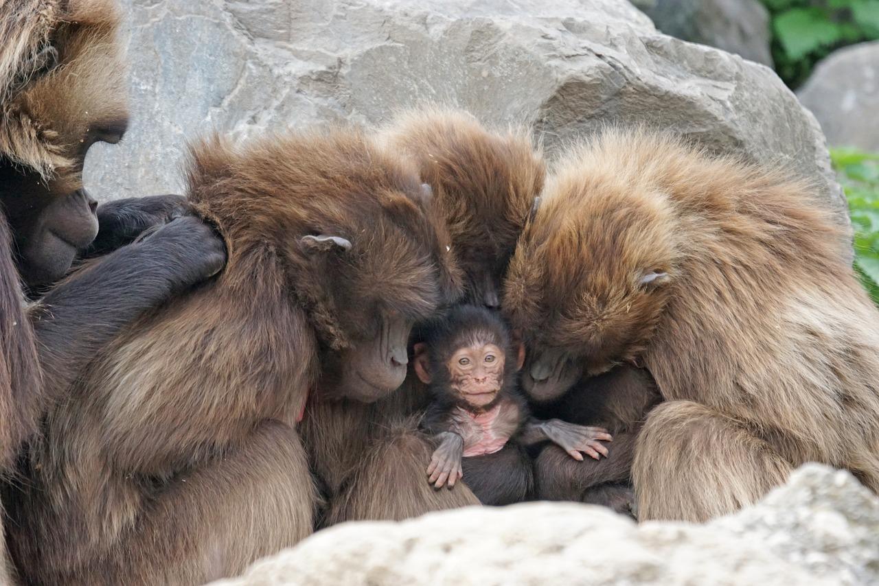 Etiyopya'da iki yeni primat türü bulundu