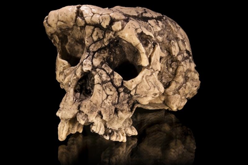 Evrim anlatısını değiştiren 4 kafatası