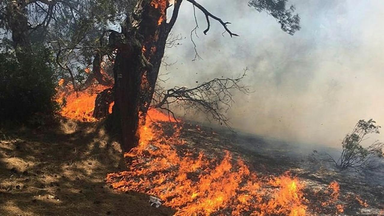 Gaziantep ve Çanakkale'de ormanlara giriş yasaklandı