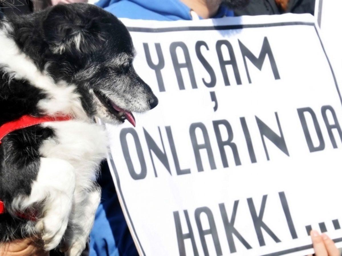 Hayvanları Koruma Kanun Teklifi TBMM'ye geliyor