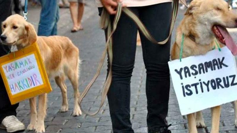 Hayvanları Koruma Kanunu Teklifi, komisyonda kabul edildi