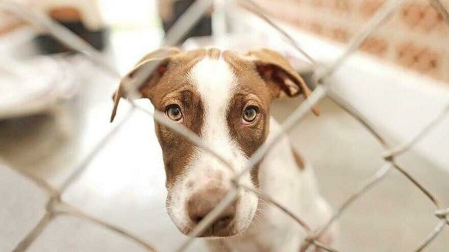 Hayvanların korunmasına ilişkin düzenleme kabul edildi