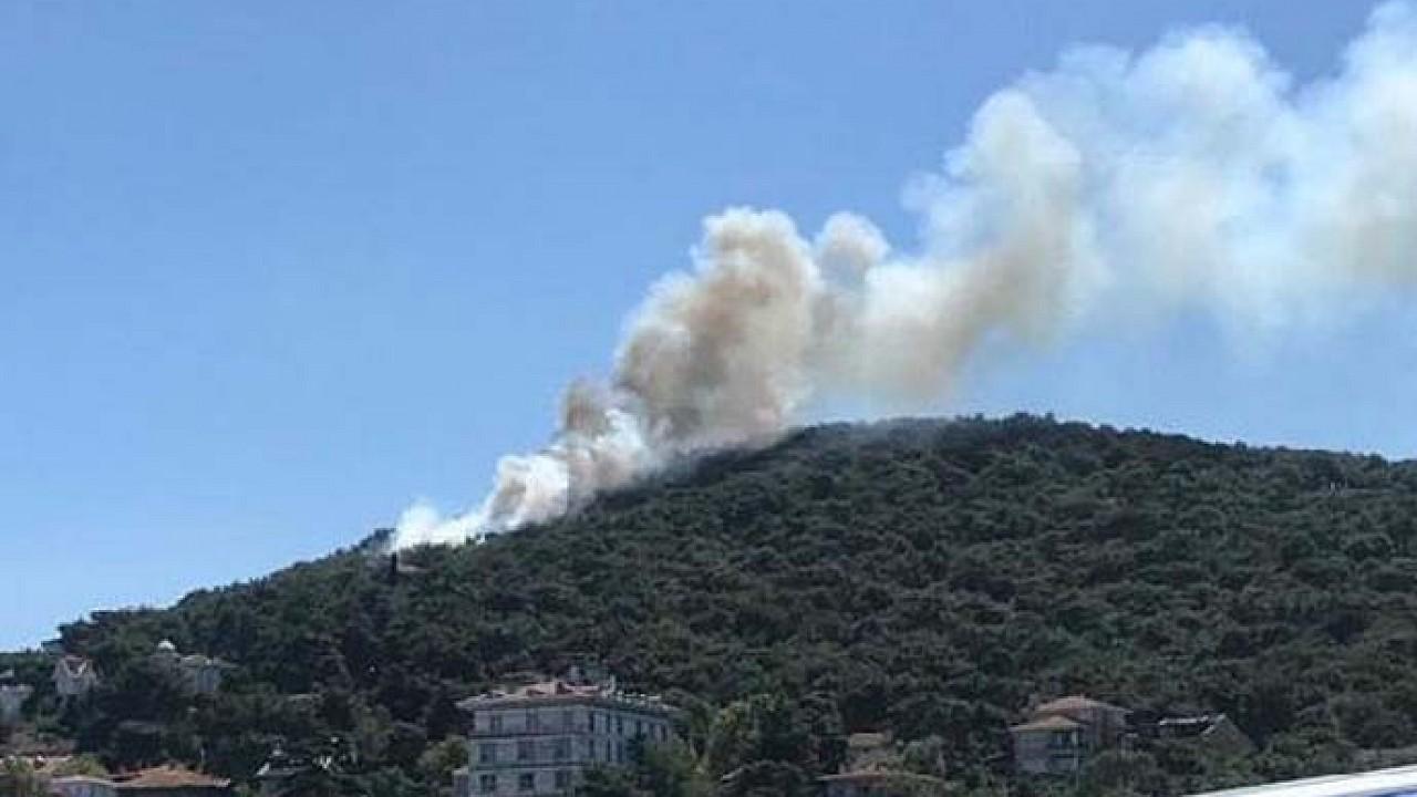 Heybeliada'da orman yangını: Kontrol altına alındı
