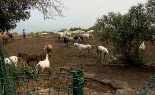 İBB'den 'kayıp at' iddialarına ilişkin açıklama