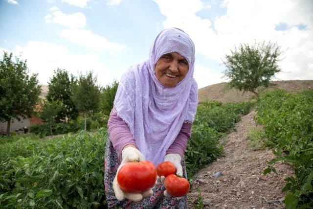 İBB'nin çiftçilere ücretsiz dağıttığı 3.5 milyon fidenin ilk mahsulleri toplanmaya başlandı