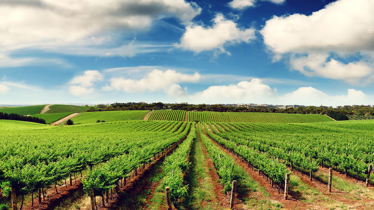 İş Bankası'ndan tarıma yeni kaynak