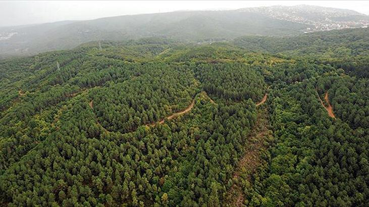 İstanbul'un aralarında olduğu 6 ilde ormanlara giriş yasaklandı