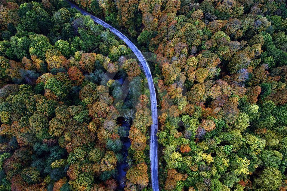 Istıranca ormanlarında taşocağı için 144 bin ağaç kesilecek