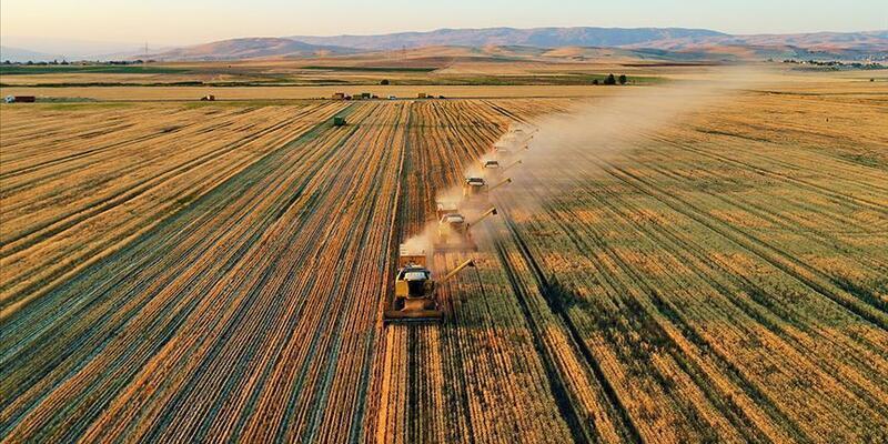 Kanada'da son 20 yılın en kurak dönemi: Tarımsal afet yaşanıyor