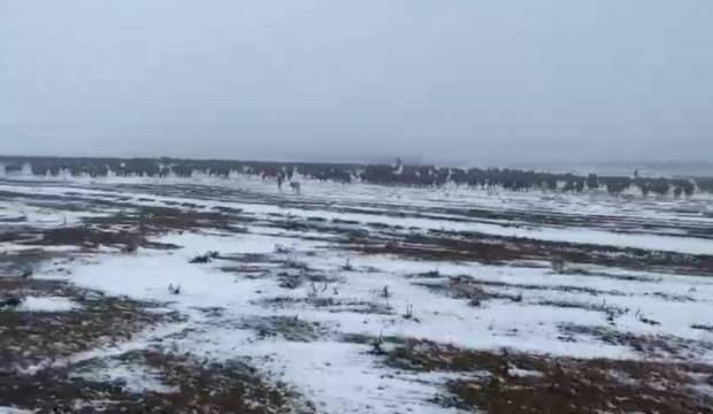 Kar yağışına hazırlıksız yakalanan yaylacılara ekipler yetişti