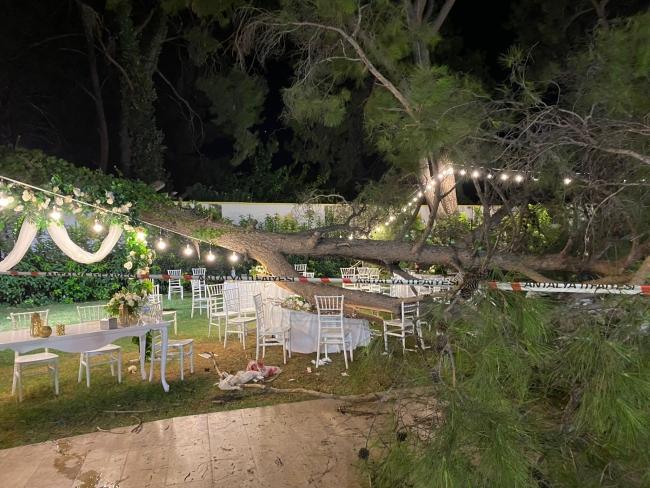 Kır düğününde ağaç devrildi: 1 ölü, 9 yaralı