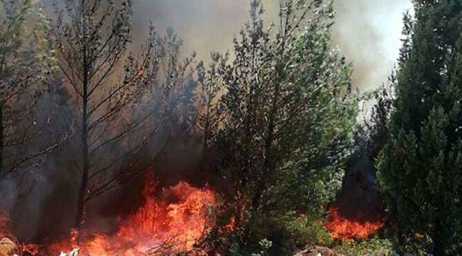 Manisa'nın Akhisar ilçesinde orman yangını