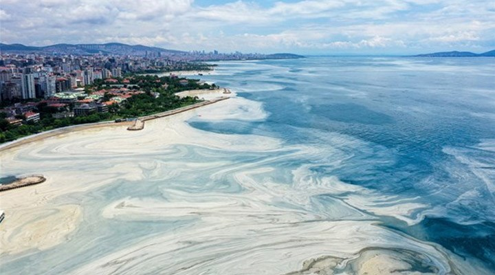 Marmara Denizi'nde müsilaj incelemesi: Bu seneki manzarayı arayacağız