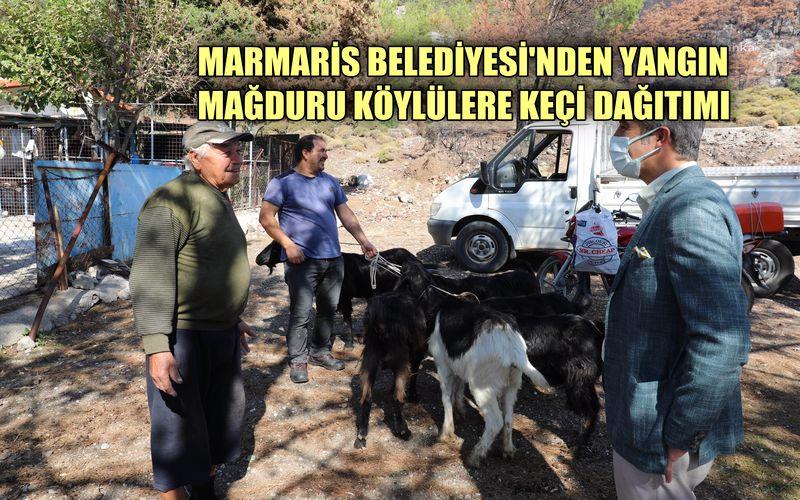 Marmaris Belediyesi'nden yangın mağduru köylülere keçi dağıtımı