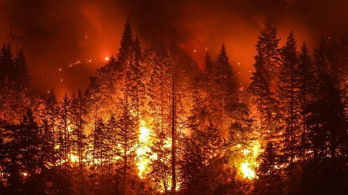 Muğla'daki orman yangını soruşturmasında bir tutuklama