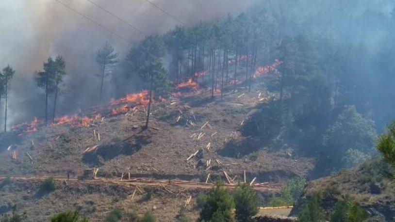 Muğla ve Aydın'da 12 günde 48 orman yangını çıktı