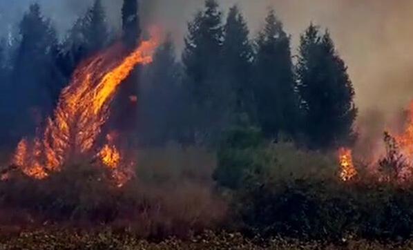 Orman Bakanı'ndan Hatay yangını açıklaması