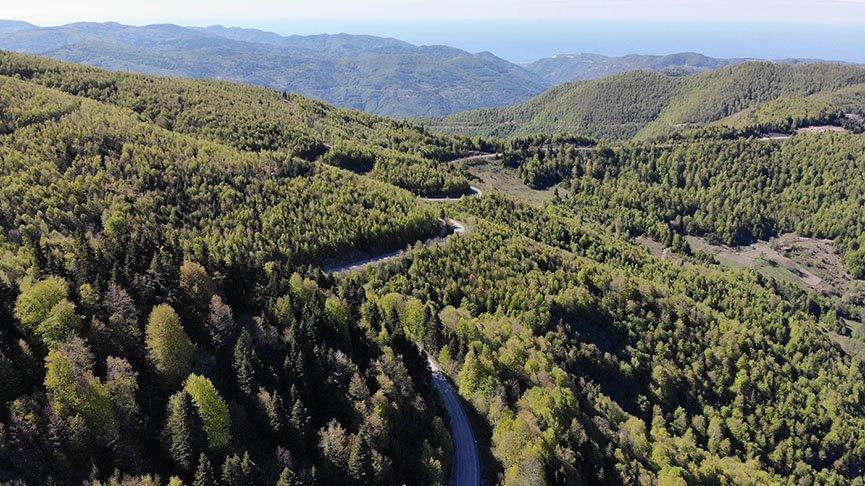 Ormanlara giriş yasağı 1 ay daha uzatıldı