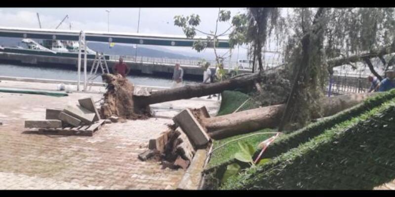 Sarıyer'de kafe bahçesindeki 2 ağaç devrildi