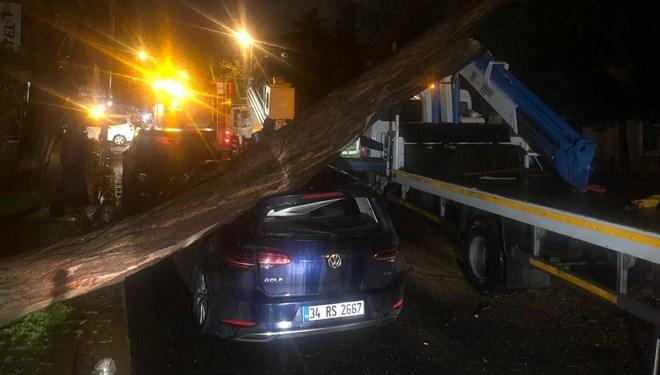 Şiddetli rüzgardan ağaç otomobilin üzerine devrildi