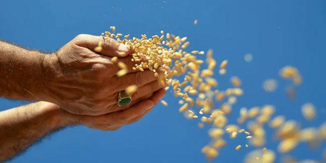 Uzmanlar uyardı: Kuraklık Türkiye'nin tahıl ambarını vurdu!