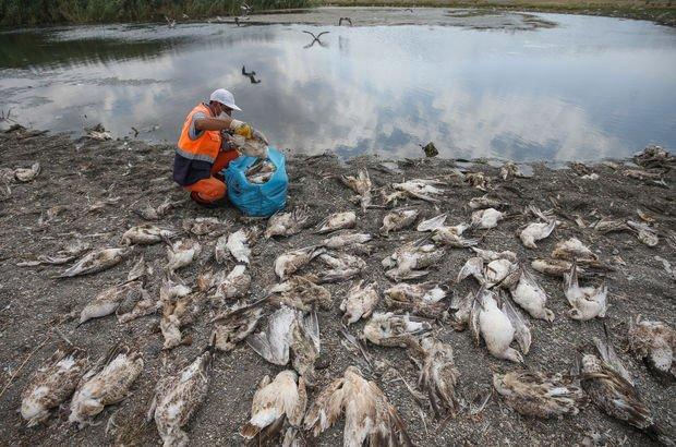 Van'daki martı ölümlerinin nedeni açlık ve stres